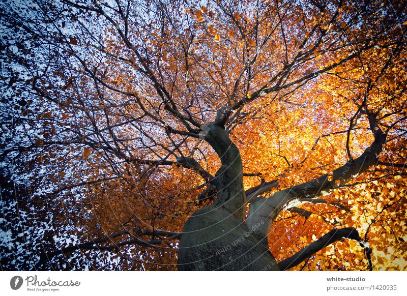 Nature Plant Blue Tree Flower Leaf Environment Life Autumn Brown Orange Gold Joie de vivre (Vitality) Branch Transience Change