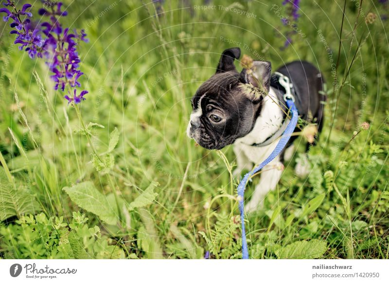 Nature Plant Green White Flower Animal Joy Black Spring Meadow Funny Playing Small Going Park Walking