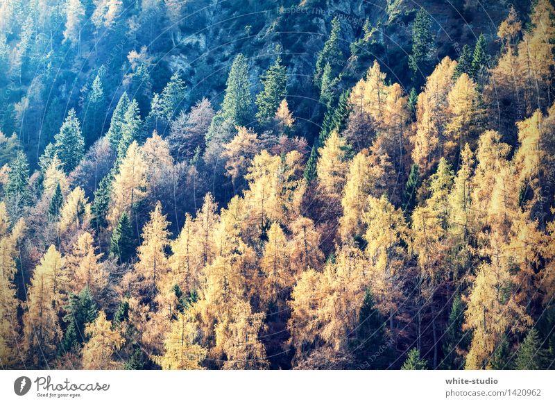 autumn forest Environment Nature Landscape Plant Life Autumn Bright Autumn leaves Autumnal colours Early fall Automn wood Autumnal landscape Forest
