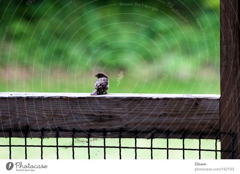 a vogerl 2 Bird Animal Tar Concrete Meadow Green Grass Small Break Calm Loneliness Grating Wood Sit Nature black Wing Line Net Joist