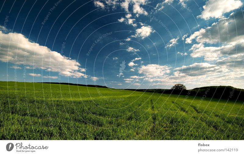 It's a beautiful day II Field Agriculture Far-off places Clouds in the sky Green Blue Exterior shot Landscape Nature Deserted Central perspective