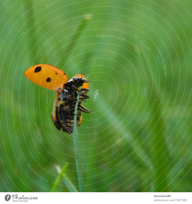 Green Red Animal Grass Freedom Flying Point Blade of grass Crawl Ladybird