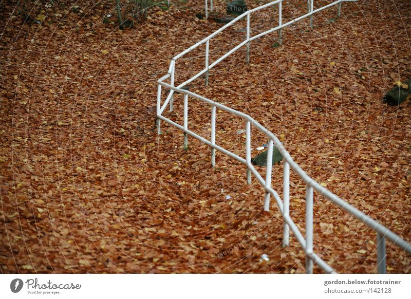 Leaf Autumn Lanes & trails Line Traffic infrastructure Banister Woodground Aimless