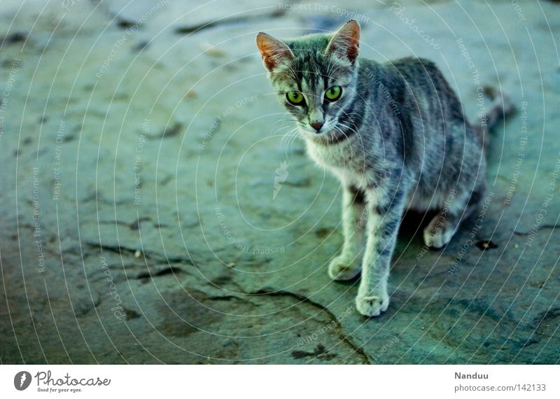 territorial boundary Cat Animal Pelt Cold Border Stone Floor covering Ground Testing & Control Mistrust Narrow Thin Appetite Paw Cute Beautiful Meow Gray