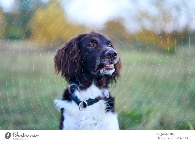 Dog Animal Hiking Friendliness Curiosity Watchfulness Pet Society