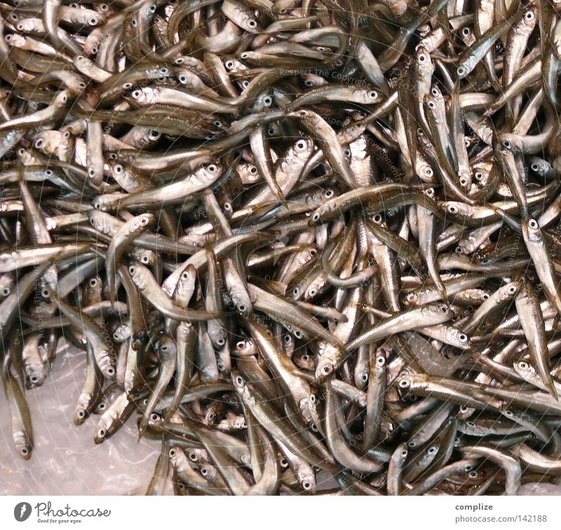 Sardinia Sardine Fish market Multiple Ocean Fish eyes Cooking Kitchen Restaurant Fish breeding Sea water Fishery Fishing (Angle) Small Gastronomy fish-smell