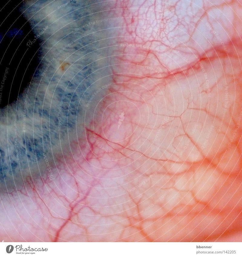 White Blue Red Black Eyes Health care Pain Vessel Allergy Iris Annoy Uncomfortable Disturbance Itch Stringer