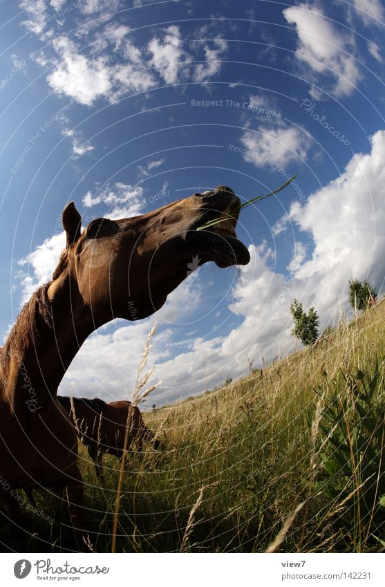 Story. Horse Animal Nostrils Nose Set of teeth Horse's bite Lips Snout Field Meadow Pasture Willow tree Fisheye Gray (horse) Agriculture Detail Clouds