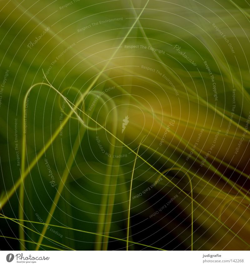 grass Grass Blade of grass Muddled Complicated Spiral Entwine Coil Nature Meadow Plant Green Yellow Environment Growth Life Near Delicate Fine Light Colour