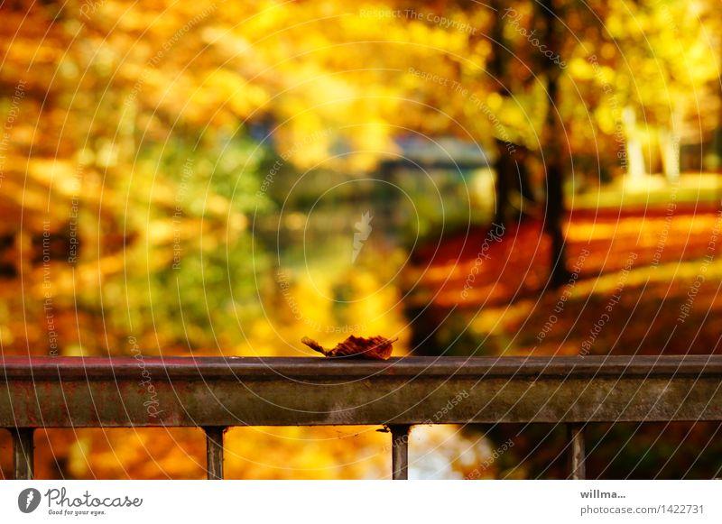 Golden Autumn Nature Landscape Beautiful weather Autumnal Autumnal colours Autumn leaves Autumnal weather Autumnal landscape Leaf Multicoloured Colour noise