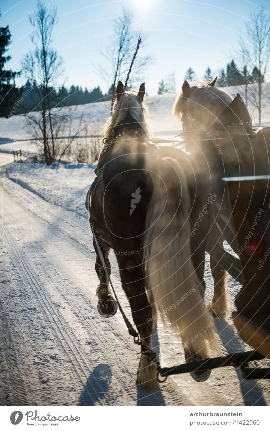 Horse carriage in winter Ride Vacation & Travel Tourism Trip Winter Snow Winter vacation Environment Nature Landscape Beautiful weather Ice Frost Street