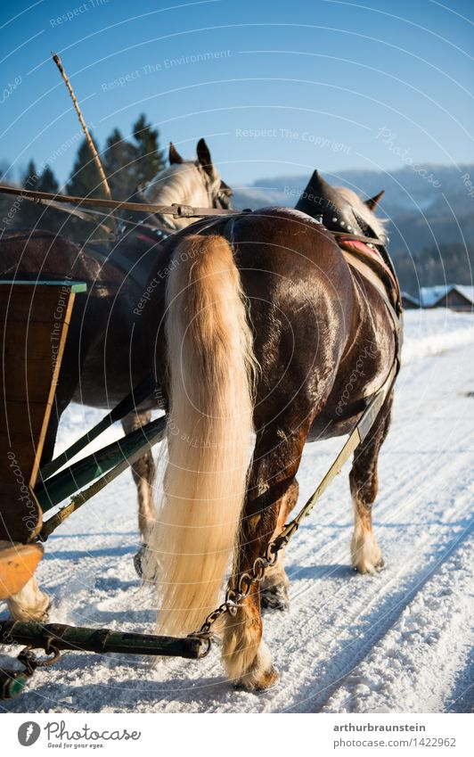 Horse carriage in winter Style Leisure and hobbies Ride Tourism Trip Winter Snow Winter vacation Nature Landscape Sunlight Beautiful weather Street