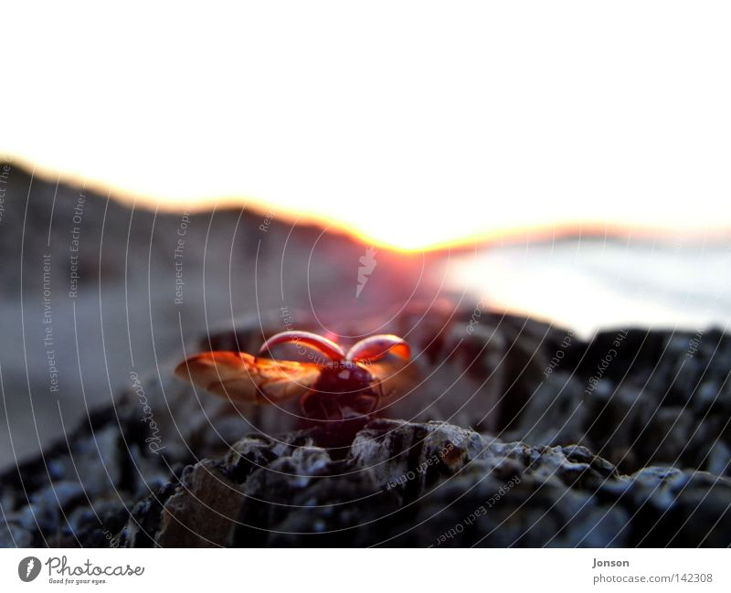 departure Ladybird Departure Flying Free Freedom Far-off places Ocean Beetle Baltic Sea Sun Sunset Stone Rock Escape Evening Doomed Goodbye Home country Insect