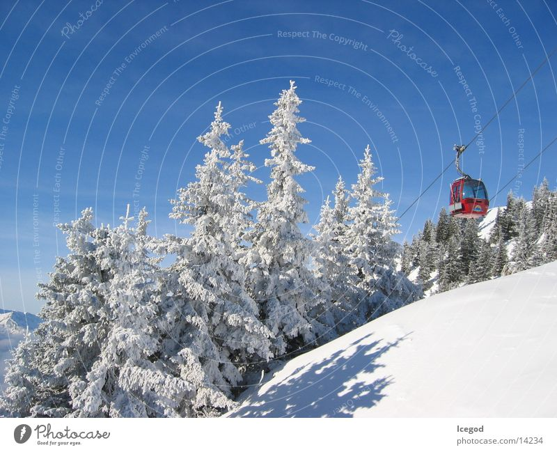 Winter Snow Trip Idyll Fir tree Beautiful weather Upward Austria Snowscape Blue sky Characteristic Cloudless sky Ski resort Gondola Coniferous forest Cable car