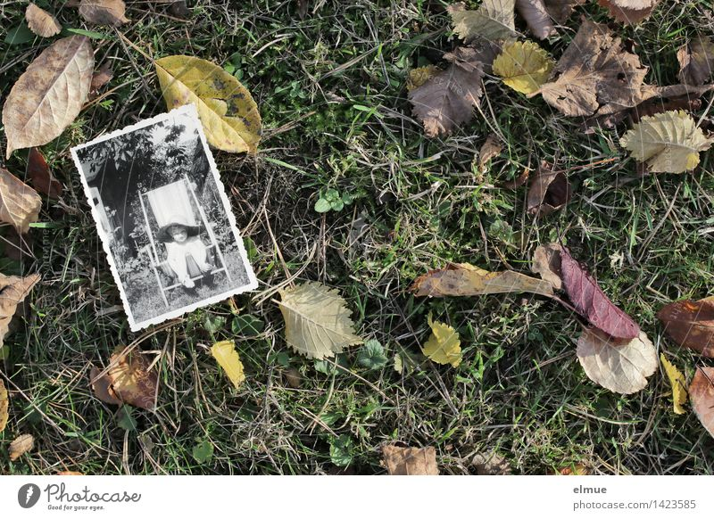Old Loneliness Leaf Life Sadness Autumn Emotions Senior citizen Meadow Time Dream Infancy Transience Retro Historic Past