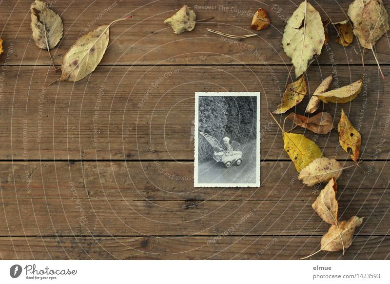 Old Loneliness Leaf Sadness Autumn Emotions Senior citizen Wood Time Brown Design Infancy Photography Transience Sign Historic