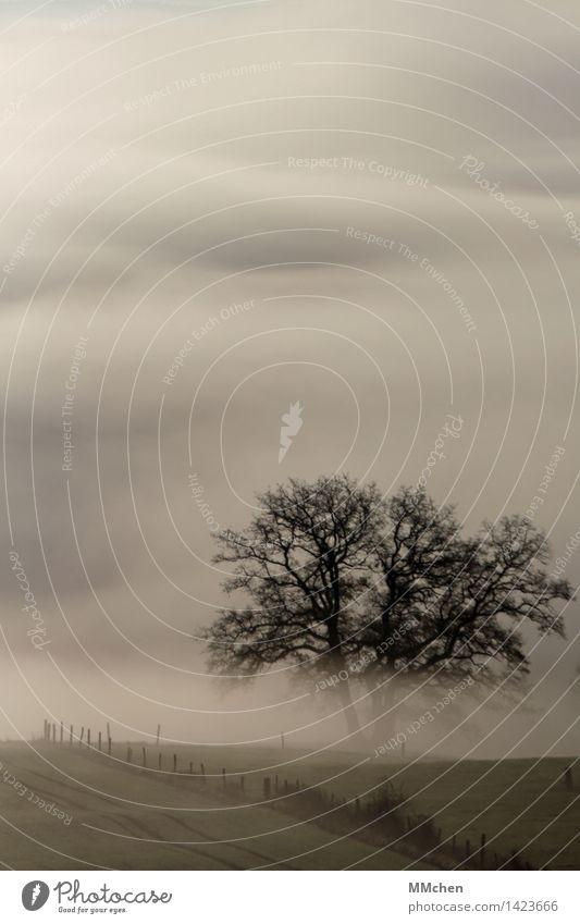 Nature Tree Calm Dark Sadness Autumn Gray Dream Field Fog Gloomy Hiking Perspective Hope Longing Belief