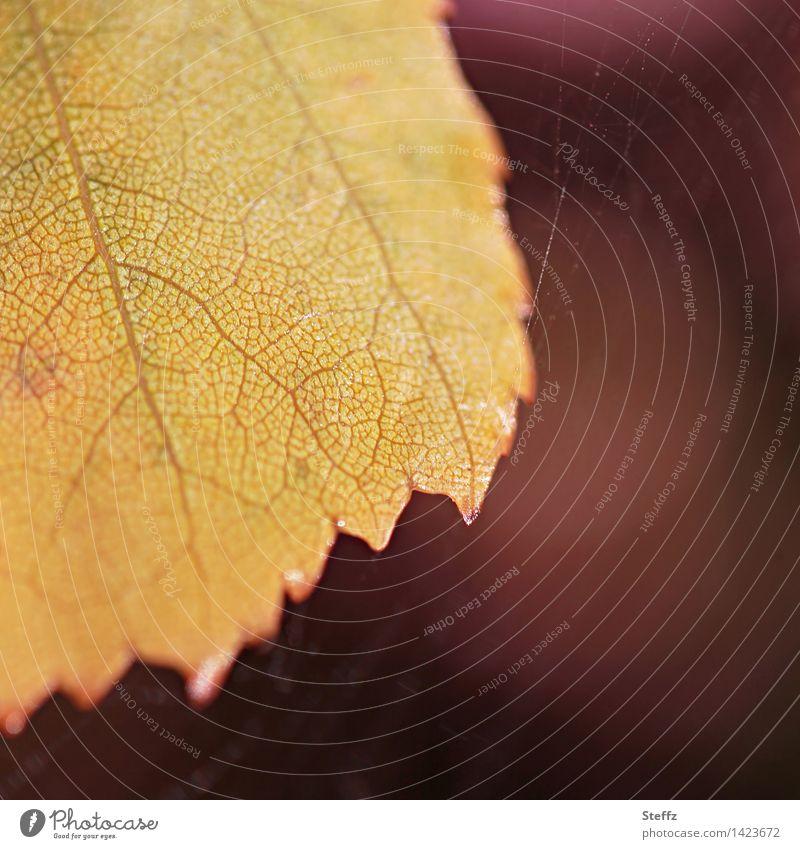 golden leaf autumn leaf Autumn leaves Leaf golden october autumn impression transient warm autumn colours autumn mood Transience Rachis warm colors warm shades