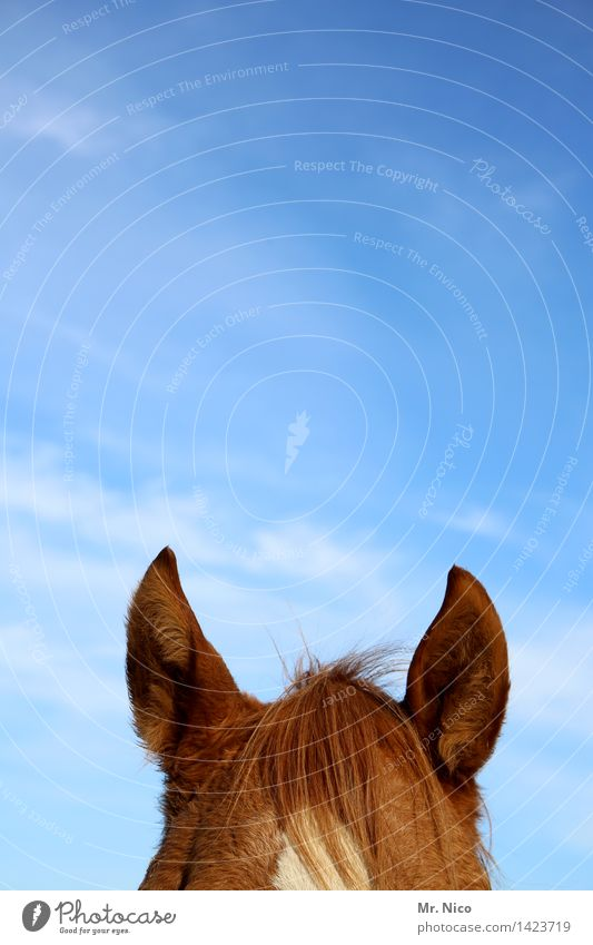 pony Ride Sky Brown Horse Horse's head Ear Point Watchfulness Listening Pony Pelt Coat color Leisure and hobbies Animalistic Colour photo Exterior shot Deserted