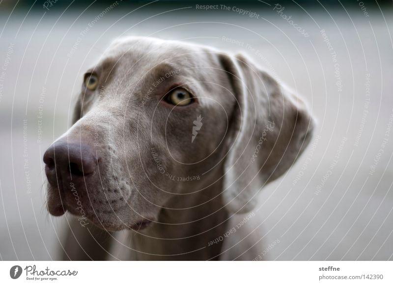 Dog Animal Eyes Cute Mammal Snout Love of animals Caress Hound Beg Puppydog eyes Wauwau