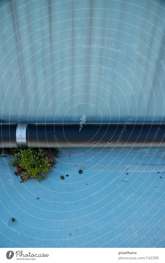 Pool edge II Summer Swimming pool Plant Water Bushes Metal Old Dry Blue Gray Black Iron-pipe Packing film Open-air swimming pool Basin Hollow Overgrown Derelict