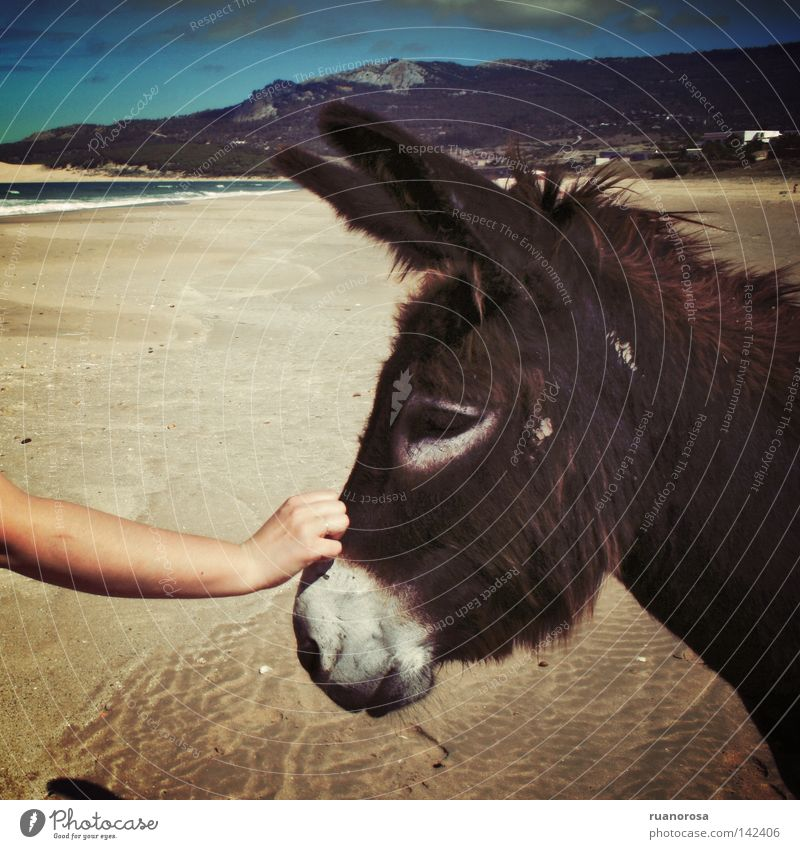 Hand Water Sky Ocean Blue Summer Beach Vacation & Travel Animal Mountain Sand Sweet Communicate Mammal Communication Donkey