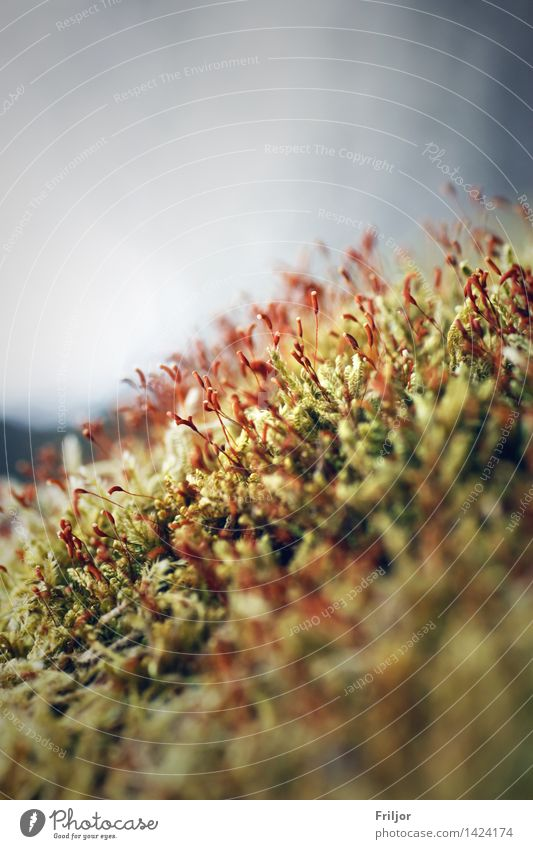 Nature Plant Green Red Blossom Spring Natural Moss