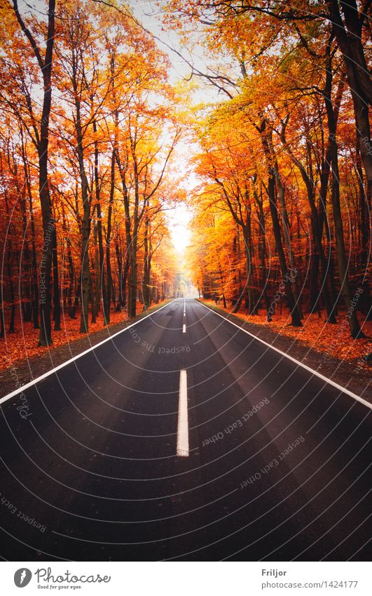 autumn street Nature Plant Autumn Tree Forest Street Free Natural Country road Footpath Autumnal colours Beech wood Colour photo Exterior shot Deserted Day