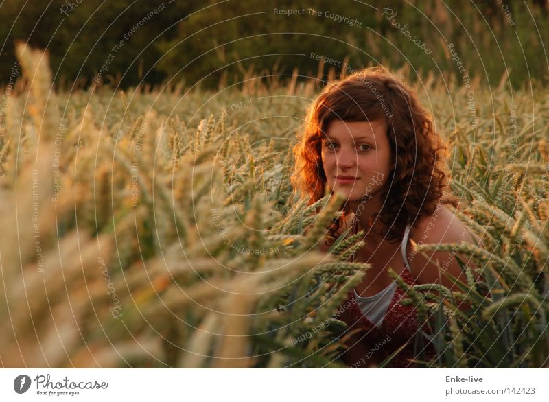 Nature Beautiful Summer Colour Relaxation Sand Field Horizon Earth Grain Woman Hide Curl Dusk Cornfield Wheat