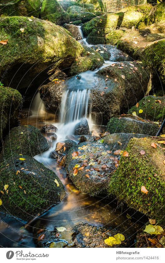 watercourse Environment Nature Landscape Plant Water Autumn Moss Leaf Forest Brook River Waterfall Green Serene Calm Idyll Runlet Stony Rock mossy Colour photo