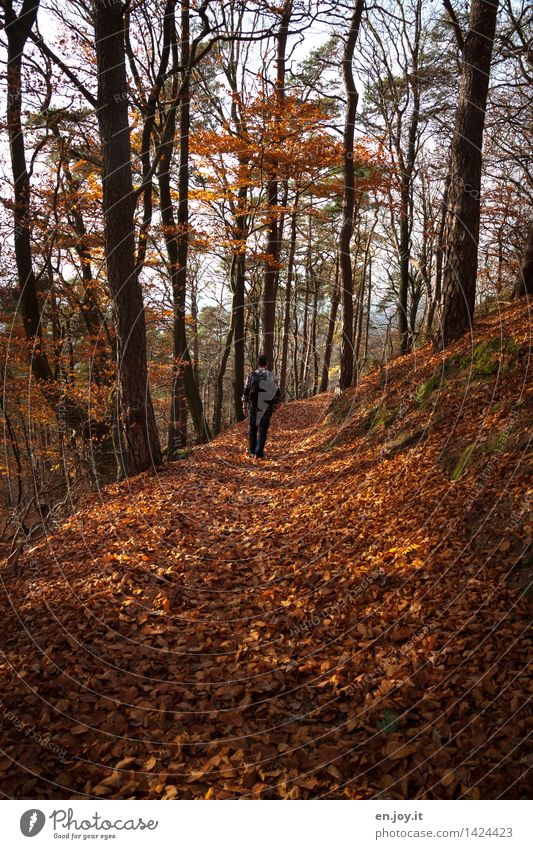 Human being Nature Vacation & Travel Man Relaxation Loneliness Landscape Leaf Calm Forest Adults Environment Autumn Movement Lanes & trails Health care