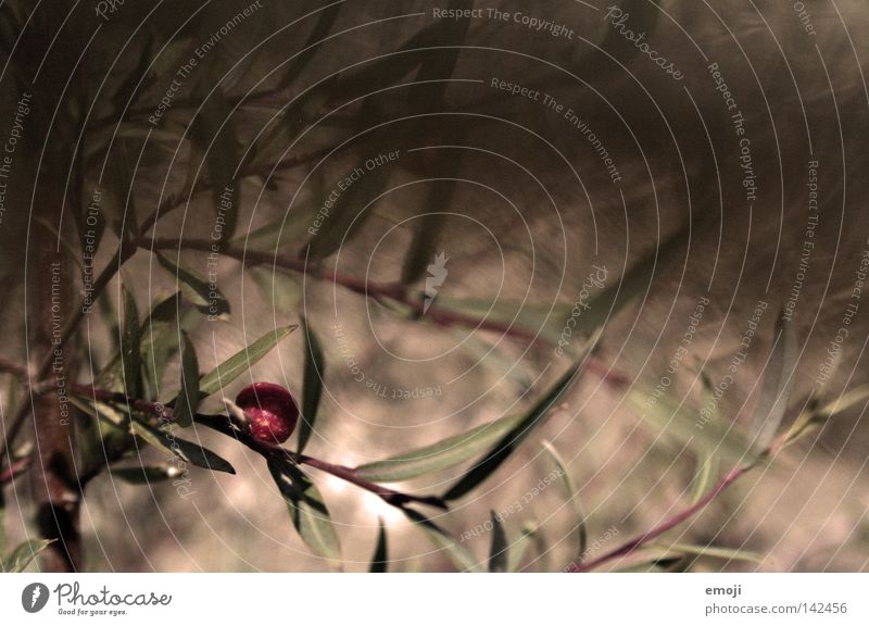windy warm. Plant Bushes Brown Nature Blur Depth of field Movement Wind Physics Breeze Air Painting and drawing (object) Painted Summer Fruit brow plan