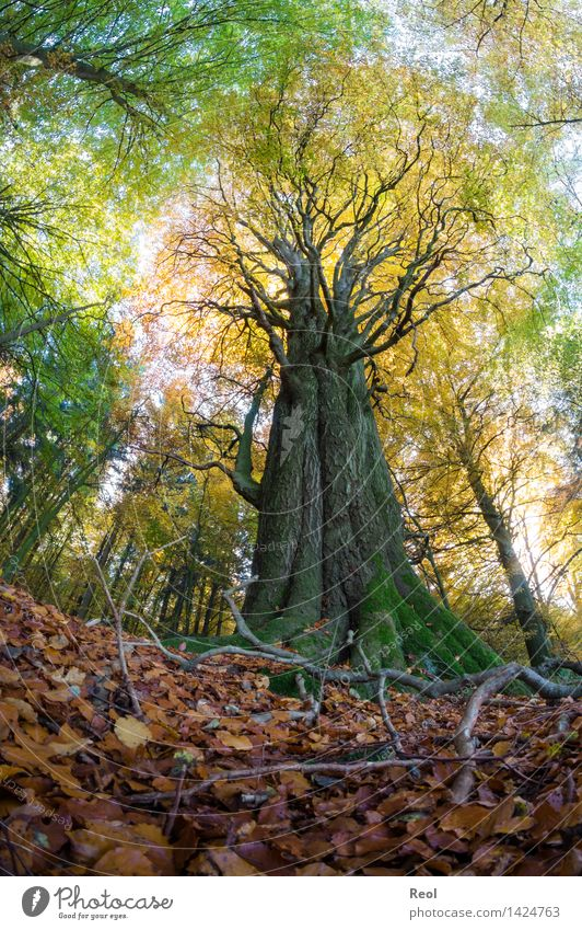 Old Plant Tree Landscape Leaf Calm Forest Environment Life Autumn Brown Wild Growth Gold Large Beautiful weather