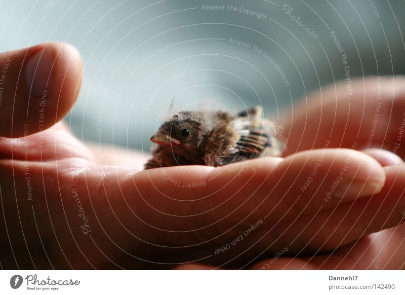 Secure Sparrow Hand Safety (feeling of) Help Bird Feather Beak Loneliness Small Large Needy Trust