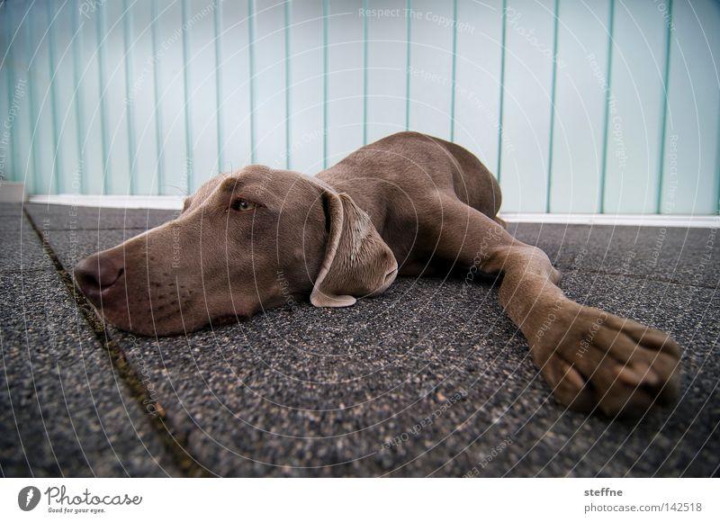 Dog Relaxation Animal Sadness Cute Sleep Mammal Boredom Cuddly Comfortable Snout Cuddling Paving tiles Love of animals Hound Beg