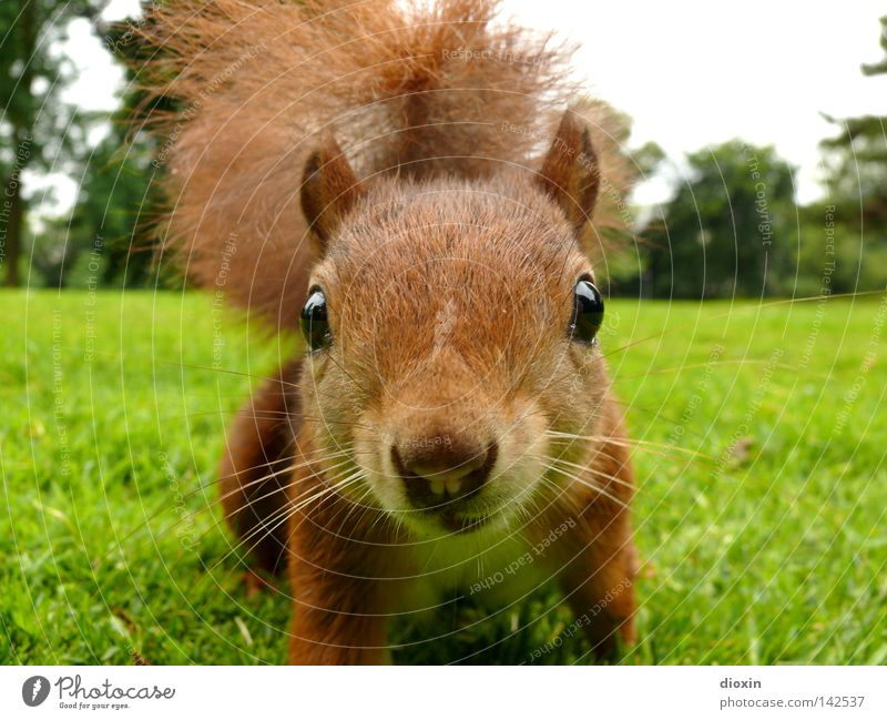 Nature Joy Animal Environment Meadow Eyes Life Grass Hair and hairstyles Garden Park Brown Wild animal Nose Cute