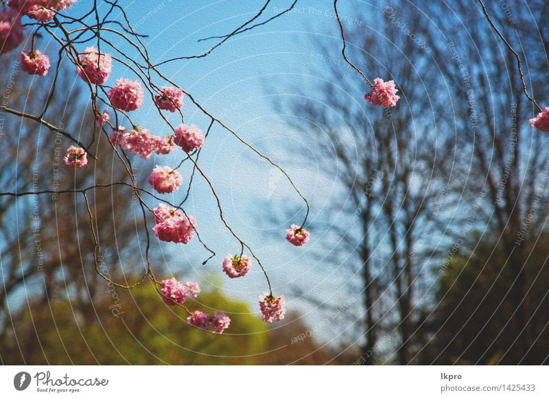 tree and blossom flowers natural Nature Plant Green Beautiful Colour Summer Tree Flower Leaf Blossom Spring Natural Garden Lake Pink Fruit