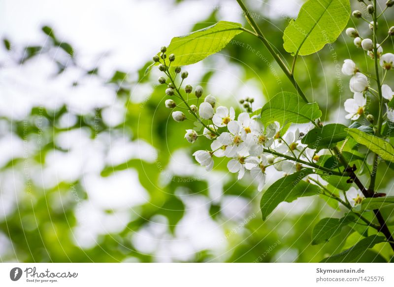 Nature Plant Blue Green White Tree Leaf Forest Mountain Environment Yellow Blossom Meadow Garden Brown Rock