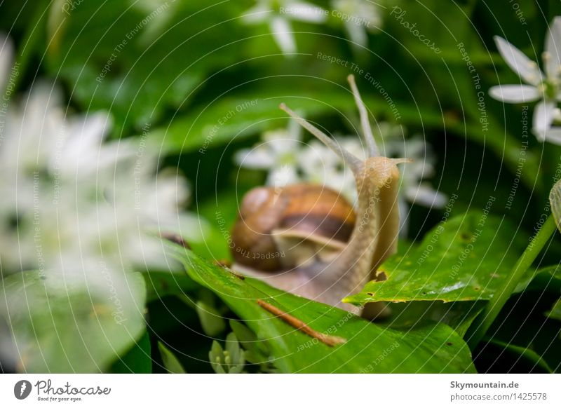 snail Environment Nature Plant Animal Sun Sunlight Spring Flower Leaf Blossom Garden Meadow Field Forest Hill River bank Brook Wild animal Snail Animal face 1