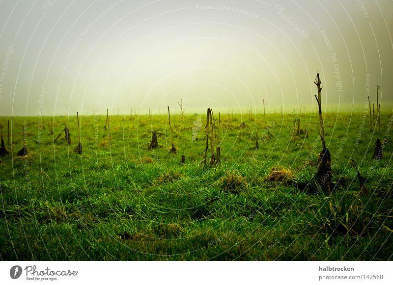 hopeless cases III Winter Grass Field Landscape Fog Wiese Grün nebel Feld Landschaft Stille