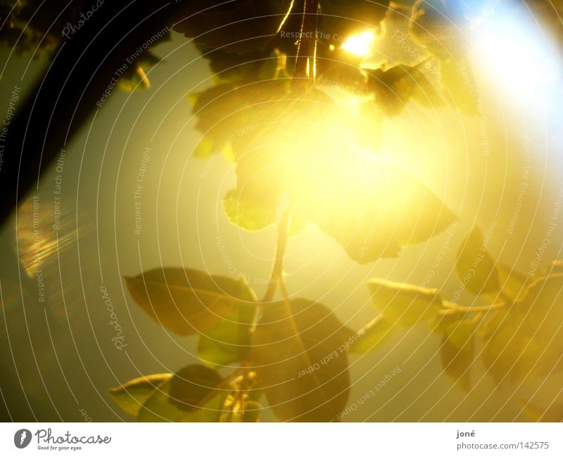 Explosion of the sun's rays Sun Gold Leaf Lighting Sunbeam Physics Summer Might Celestial bodies and the universe Warmth