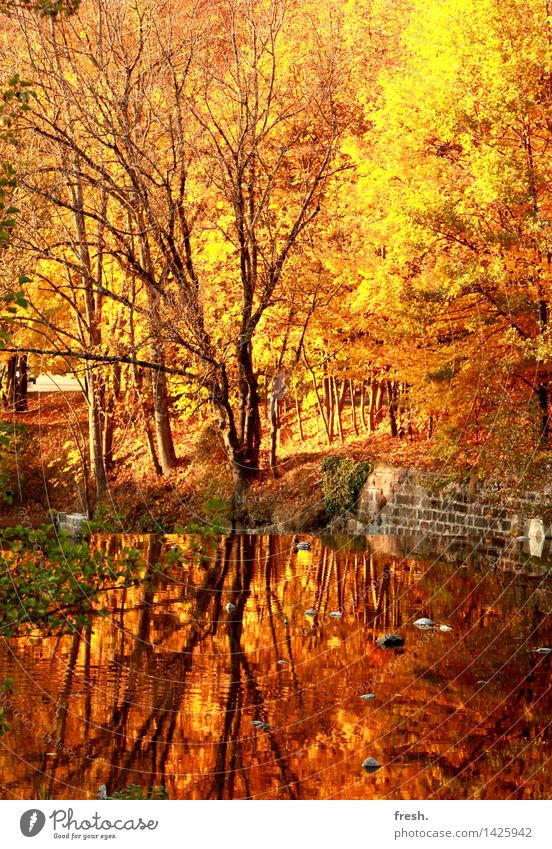 Golden Mirror Happy Well-being Contentment Senses Relaxation Calm Leisure and hobbies To go for a walk Forest Autumn Autumnal Leaf Vacation & Travel Trip