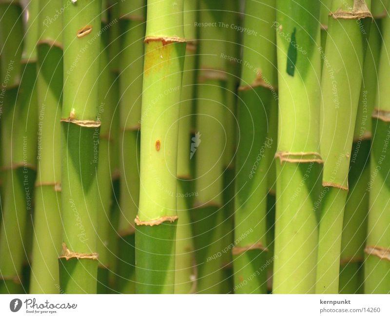 Green Plant Bamboo stick
