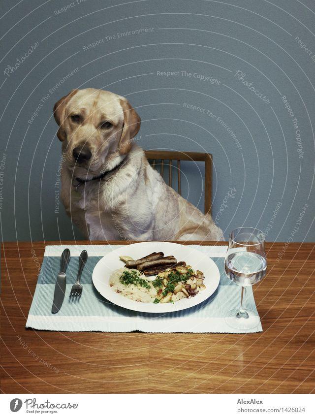 Sausages always go. Vegetable Bratwurst sauerkraut Hash brown potatoes Beverage Wine Plate Glass Wooden table Chair Kitchen Pet Dog Labrador 1 Animal Lunch hour