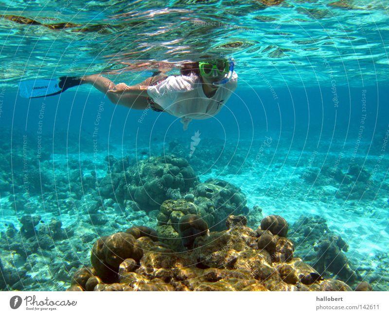 Water Ocean Underwater photo Dive Maldives Aquatics Reef Snorkeling