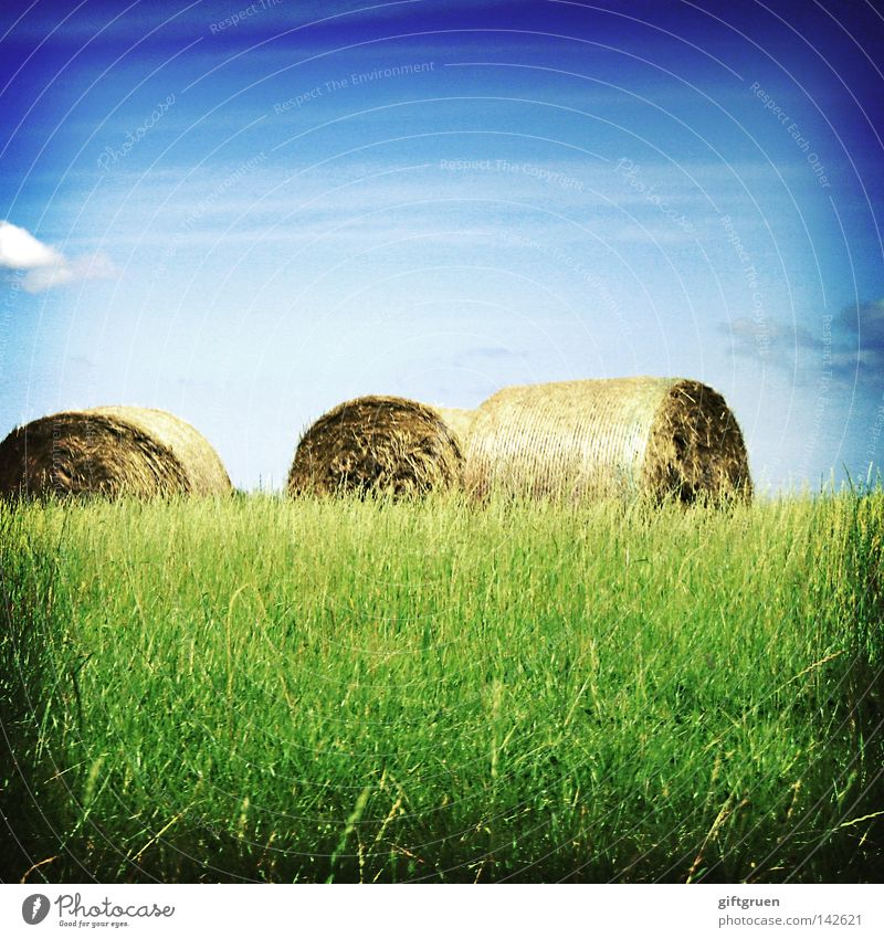 Sky Summer Autumn Meadow Field To fall Grain Agriculture Harvest Coil Feed Straw September August Bale of straw