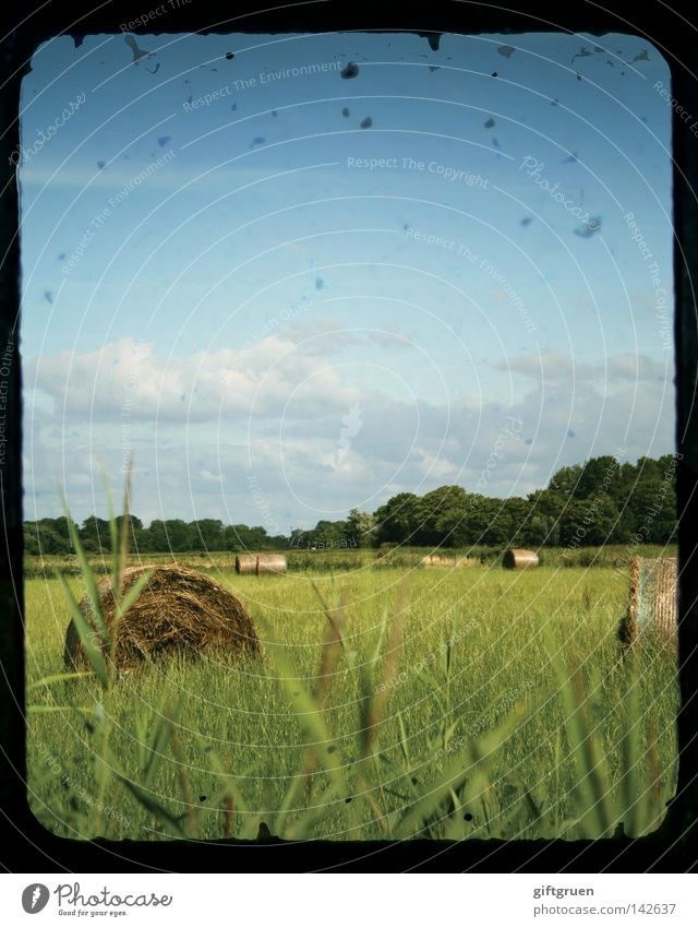 late summer Summer September Straw Bale of straw Hay bale Field Agriculture Meadow Country life Indian Summer August Harvest Landscape Sky Coil crop roll ttv