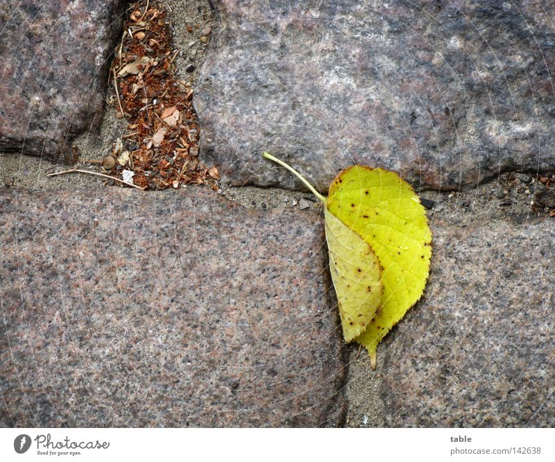 harbinger Autumn Leaf Lime tree Lime leaf Cobblestones Granite Gray Yellow Green Stone Minerals Transience Street Rain Wind To fall Lie stone grey Stalk