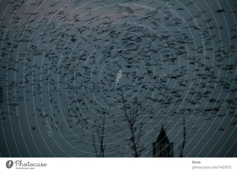 flood of birds Bird Twilight Creepy Night Multiple Church spire Fear Panic Sky Flock Maximum Many
