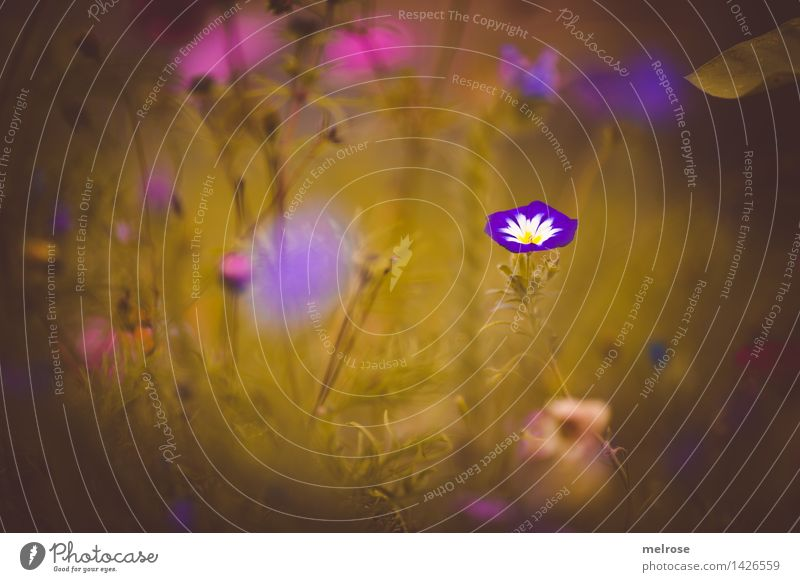 dreamy III Elegant Style Nature Plant Summer Beautiful weather Leaf Blossom Wild plant Flowering plant Flower meadow Part of the plant Grass blossom flower mix